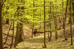 Springtime forest Stock Images
