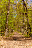 Springtime Forest 4. The Faget Forest in the springtime, full with paths for city escapes. It's a forest near Cluj Napoca, Romania Royalty Free Stock Photo