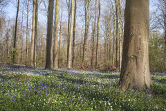 Springtime in the forest Stock Photography
