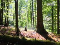 Springtime in the forest Royalty Free Stock Images