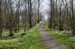 Springtime forest view Royalty Free Stock Photos