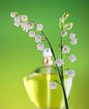 Springtime fragrance Royalty Free Stock Image
