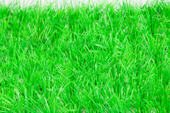 Springtime, fresh green grass lawn Royalty Free Stock Photos