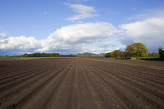 Springtime furrows. An english agricultural landscape with potato rows under stormy blue skies in springtime Stock Photo