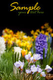 Springtime in garden Royalty Free Stock Photography
