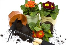 Springtime gardening Royalty Free Stock Photo