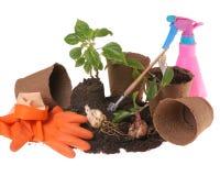 Springtime gardening Stock Image