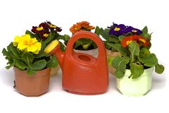 Springtime gardening Stock Photo