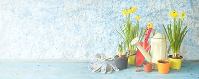 Springtime gardening, young flowers, Stock Image