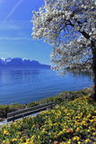 Springtime at Geneva or Leman lake, Montreux, Switzerland Royalty Free Stock Images