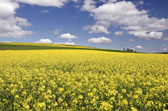 Springtime, Germany Stock Photography