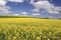 Springtime, Germany Stock Photography