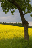 Springtime in germany Royalty Free Stock Photo