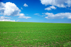 Springtime - green grass and blue sky Stock Image