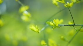 Springtime green life nature tree branch leaves stock footage