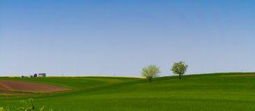 Springtime greenfields Stock Photo