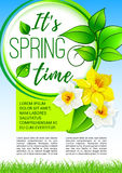 Springtime greeting holiday poster design. Spring flowers poster for springtime holiday greetings design. Vector blooming narcissus or yellow daffodils with Royalty Free Stock Photo