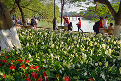 Springtime in Hanoi with Lillies Around Lake Hoan Kiem. Royalty Free Stock Images