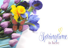 Springtime is Here sample text on white background with Spring flowers. Springtime is Here sample text on white background with blue, white and purple silk iris royalty free stock photography