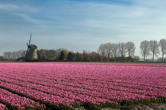Springtime in Holland Stock Photography