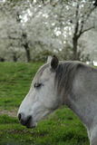 Springtime horse Stock Photo