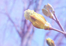 Springtime: how nature awakes. (abstract natural background Stock Photography