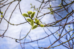 Springtime. An image of a Tree in the park at Springtime Royalty Free Stock Photo