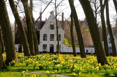 Springtime In Beguinage In Bruges Stock Photography