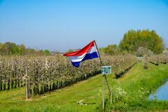 Free Springtime In Fruit Region Betuwe In Netherlands, Dutch Flag And Blossoming Orchard With Apple, Pear, Cherry And Pear Trees Royalty Free Stock Photo - 179627335