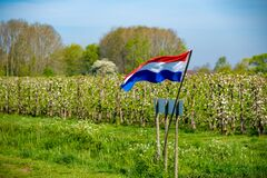 Free Springtime In Fruit Region Betuwe In Netherlands, Dutch Flag And Blossoming Orchard With Apple, Pear, Cherry And Pear Trees Stock Photography - 179627342