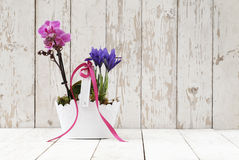 Springtime, iris and orchid flowers in basket on wooden white Stock Images