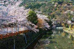 Springtime in Japan Royalty Free Stock Image