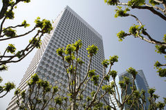 Springtime - La Defense. Pollarded plane trees and office buildings at springtime - La Defense, Paris Stock Photography
