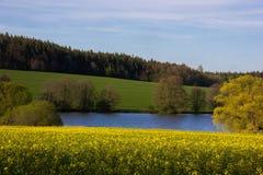Springtime lake Royalty Free Stock Image