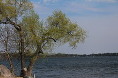 Springtime at the Lake. Tree in front of a lake on a beautiful spring day Stock Photography