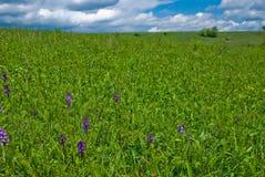 Springtime landscape Royalty Free Stock Photo