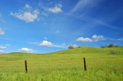 Springtime landscape. Springtime meadow and trees Royalty Free Stock Image