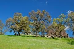 Springtime landscape Stock Photos
