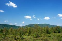 Springtime landscape. Springtime green landscape royalty free stock image