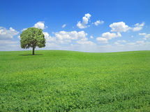 Springtime landscape. Field with grass and lonely tree in springtime Stock Image