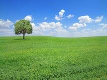 Springtime landscape Stock Image