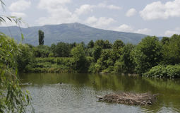Free Springtime Landscape In Zoo Sofia Stock Photos - 40496513