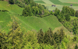 Springtime landscape in the Swiss canton of Nidwalden Royalty Free Stock Images