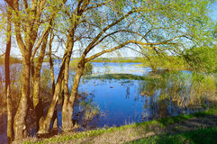 Free Springtime Landscape - Willows On The Bank Of The Small Blue River. Stock Photos - 71163293