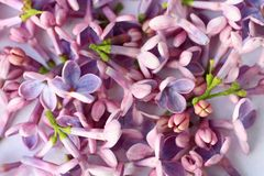 Springtime lilac background, close up Stock Images