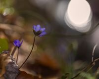 Springtime liverworts in close up Stock Photography
