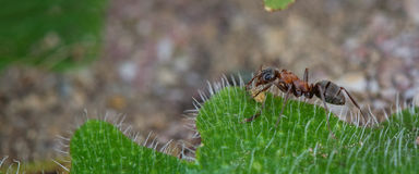 Springtime. Macro shot of an ant Stock Photos