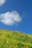 Springtime meadow Stock Photography