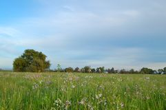 Free Springtime Meadow Stock Image - 676191