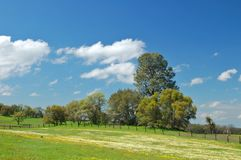 Springtime meadow Stock Images